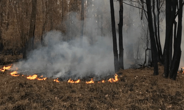 Cultural Burning is about more than just hazard reduction