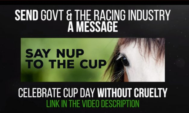 (PG Version) Honest Government Ad | The Melbourne Cup